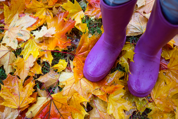 autumn mood - feet in gumboots against a background of colorful maple leaves